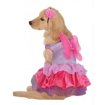 Pixie Pup